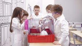 Los niños tocan el conejo en la lección de la biología almacen de metraje de vídeo