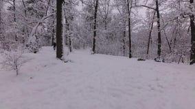 Los niños van abajo de la colina en los trineos en el bosque del invierno almacen de video