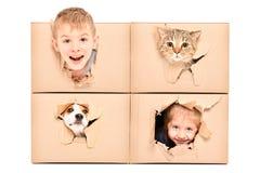 Los niños y los animales domésticos divertidos miran fuera de un agujero rasgado en una caja foto de archivo