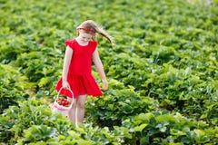 Los ni?os escogen la fresa en campo de la baya en verano foto de archivo