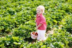 Los ni?os escogen la fresa en campo de la baya en verano imagen de archivo