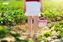 Los ni?os escogen la fresa en campo de la baya en verano imagenes de archivo