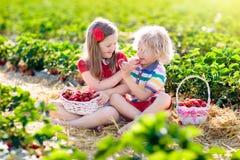 Los ni?os escogen la fresa en campo de la baya en verano fotografía de archivo libre de regalías