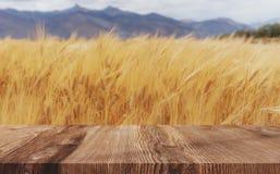 Los oídos del trigo colocan el fondo, cosecha madura del trigo con el piso de madera imagen de archivo libre de regalías