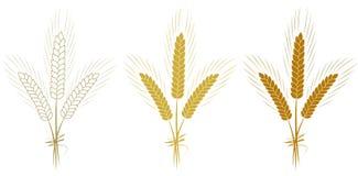Los oídos del trigo fijaron aislado en el ejemplo blanco del vector del fondo Foto de archivo libre de regalías