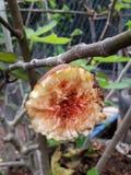 Los objetos de la fruta Foto de archivo