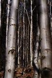 Los ojos de los árboles imagen de archivo libre de regalías