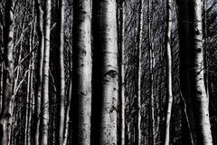 Los ojos de los árboles foto de archivo