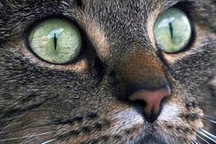 Los ojos de Cat´s imagenes de archivo