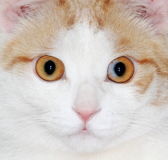 Los ojos de gato imagenes de archivo