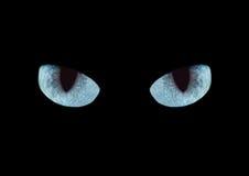 Los ojos de gato Fotos de archivo libres de regalías
