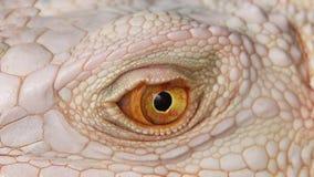 Los ojos de la piel de la iguana se cierran encima de fondo macro de la naturaleza Fotos de archivo libres de regalías