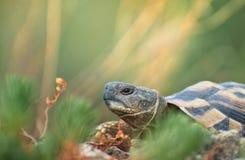 Los ojos de la tortuga Foto de archivo libre de regalías