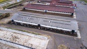 Los ojos de p?jaro ven del abej?n que vuela de la granja grande con las vacas en el medio de campos fotografía de archivo libre de regalías