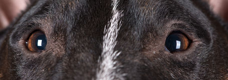 Los ojos del perro se cierran para arriba Fotografía de archivo