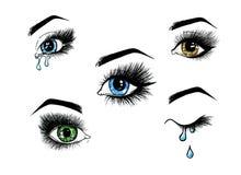 Los ojos femeninos abiertos hermosos fijados con las pestañas largas están en un fondo blanco Ejemplo de la plantilla del maquill Fotografía de archivo libre de regalías