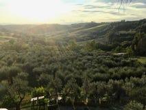 Los olivares de la Toscana, Italia bajo puesta del sol foto de archivo
