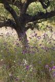 Los olivos y el cardo púrpura florece cerca de stoupa en mani en GR Fotos de archivo libres de regalías