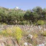 Los olivos y las flores del amarillo acercan a stoupa en mani en el pelo griego Fotografía de archivo libre de regalías