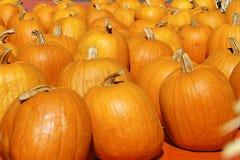 Los orange Kürbise Amerikanischer Kürbisflecken Stockfoto