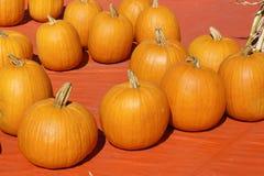 Los orange Kürbise Amerikanischer Kürbisflecken Lizenzfreies Stockfoto