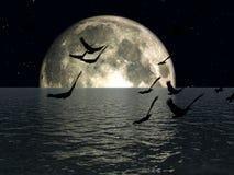 Los pájaros 3 Imagen de archivo libre de regalías
