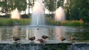 Los pájaros acercan a la fuente metrajes