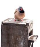 Los pájaros coloridos exóticos Imagen de archivo
