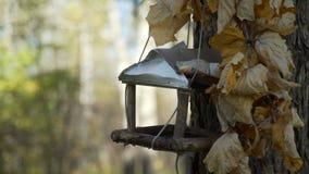 Los pájaros comen en el alimentador