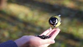 Los pájaros comen las semillas con sus manos