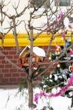 Los pájaros contienen en árbol Imágenes de archivo libres de regalías
