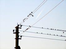 Los pájaros de un alambre y del vuelo acepillan Imagen de archivo