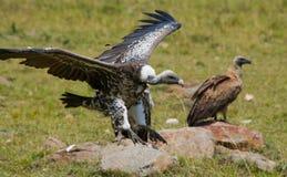 Los pájaros despredadores se están sentando en la tierra kenia tanzania Imagen de archivo