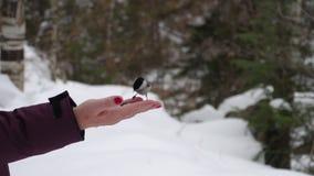 Los pájaros a disposición comen las semillas