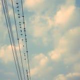 Los pájaros en línea eléctrica telegrafían contra el cielo azul con el backgroun de las nubes Fotografía de archivo libre de regalías
