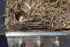 Los pájaros enormes de una paja jerarquizan construido dentro de una parrilla del gas fotos de archivo libres de regalías