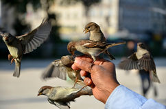 Los pájaros están introduciendo Imagen de archivo libre de regalías