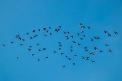 Los pájaros están volando Fotos de archivo libres de regalías