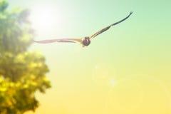 Los pájaros están volando en el cielo Tono del vintage del estilo Imagen de archivo