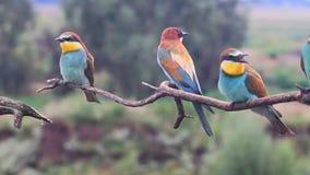 Los pájaros exóticos se sientan en las ramas y cantan metrajes