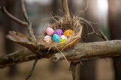 Los pájaros jerarquizan con los huevos de Pascua en alta rama en el bosque Fotos de archivo libres de regalías