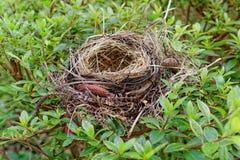 Los pájaros jerarquizan en el jardín botánico hermoso de Furnas Imagenes de archivo