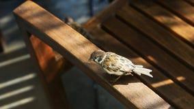 Los pájaros pueden también descansar sobre sillas Foto de archivo