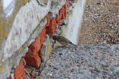 Los pájaros que se sientan en la tierra Imágenes de archivo libres de regalías
