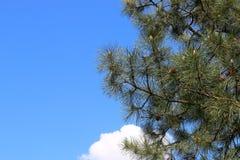 Los pájaros que se sientan en la tierra Imagen de archivo libre de regalías