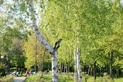 Los pájaros que se sientan en la tierra Fotografía de archivo libre de regalías