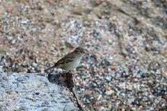 Los pájaros que se sientan en la tierra Foto de archivo