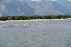 Los pájaros que se sientan en un banco de arena en el nacional khao-Sam-ROI-yot equiparan Imágenes de archivo libres de regalías