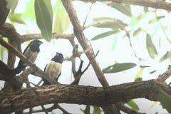 Los pájaros románticos se juntan fotografía de archivo