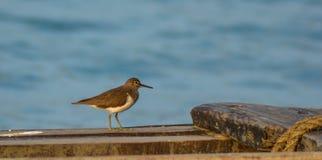 Los pájaros también les gusta canotaje Imagen de archivo